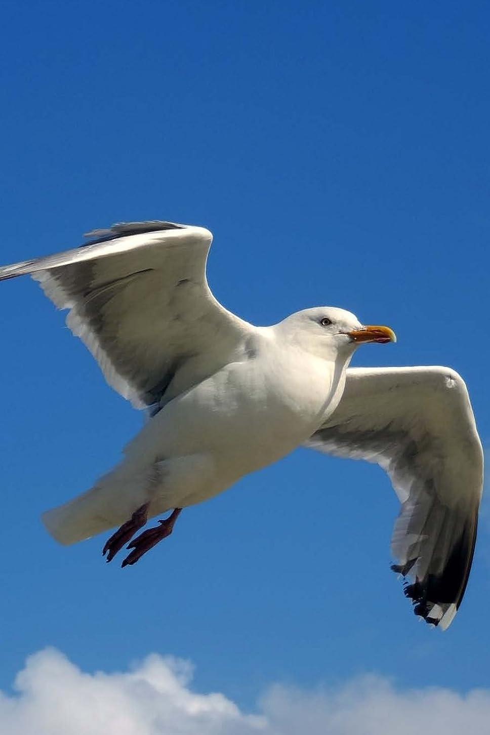 アライアンスゆでる規定Seagull Notebook: 150 lined pages, softcover, 6 x 9