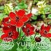 Pinkdose 100 pezzi bonsai Caltha palustris fiore, pianta Caltha palustris, aroma ricco, bonsai fiore pianta, così carino e belle: 3 #2
