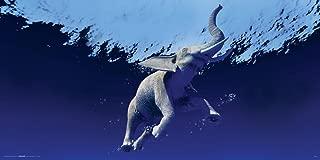 swimming elephant print