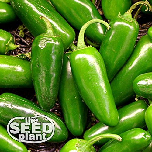 Jalapeno M Pepper Seeds - 200 Seeds NON-GMO