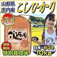 令和元年 【当日精米】 山形県 コシヒカリ 一等米 7分づき 10kg (5kg×2袋) 特別栽培米
