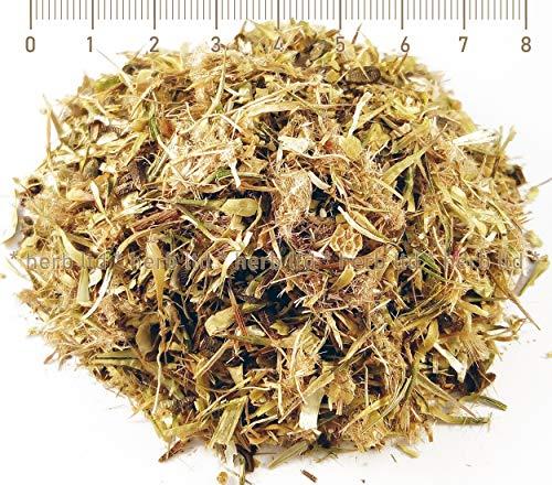 Eberwurzen Eselsdistel, Distel Blühende, Onopordum Acanthium, Kräuter Blüten