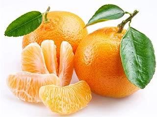 Cold-hardy - Sweet Mandarin Orange Tree ( Citrus reticulata ) 25+ fresh seeds