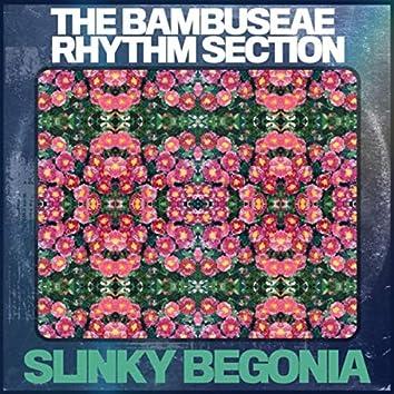 Slinky Begonia