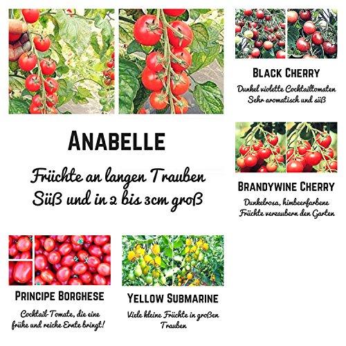 Bio - Cocktailtomaten-Samen-Set- 5 extrem leckere Tomatensorten für einen traumhaften Salatgenuss in Bio Qualität - Jede Sorte beinhaltet 10 Korn