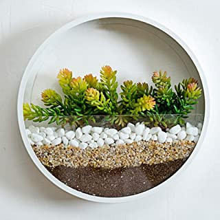 SHE'S HOME Round Glass Wall Planter, Indoor Decorative Contemporary Morden Circle Iron Vase for Herb,Small Cactus for Room Decor, 10