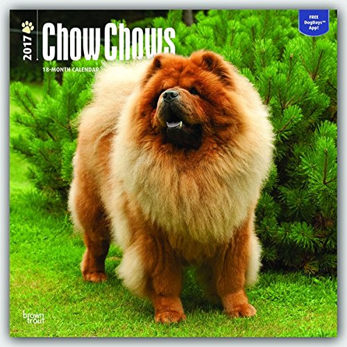 Chow Chows 2017 Square 12x12 Wall Calendar