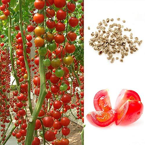 LIANA IRIWN 130 Granulat Klettertomate Samen Set Gartenpflanzen Kletterpflanzen,Gute Wahl für den Hausgarten