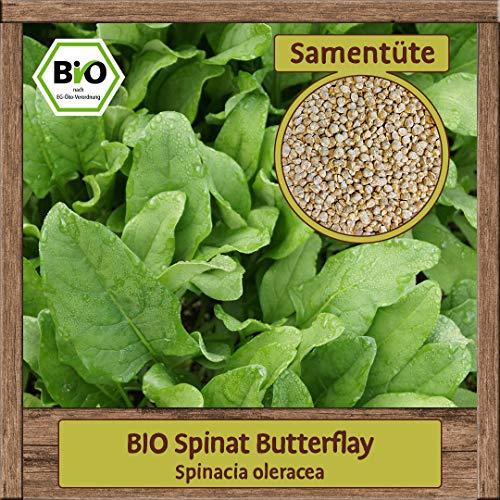 Samenliebe BIO Spinat Samen Butterflay (Spinacia oleracea) Gemüsesamen Spinatsamen Blattspinat für Salate für Sommer & Winter Anbau 4g für 2m²