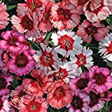 Park Seed Super Parfait Mix Dianthus Seeds