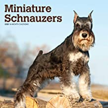 Miniature Schnauzers 2020 12 x 12 Inch Monthly Square Wall Calendar, Animals Small Dog Breeds