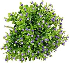 Best purple gypsophila plant Reviews