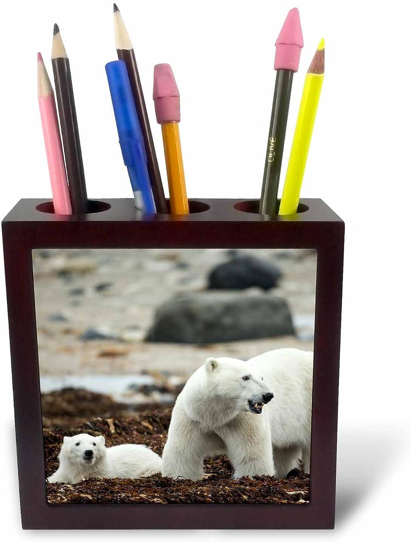 3dRosa 226902 _ PH 1 5 Kanada Manitoba Eisbär und Junges auf Seetang-Platte mit Halter B01J2IRUQ2 | Neuartiges Design