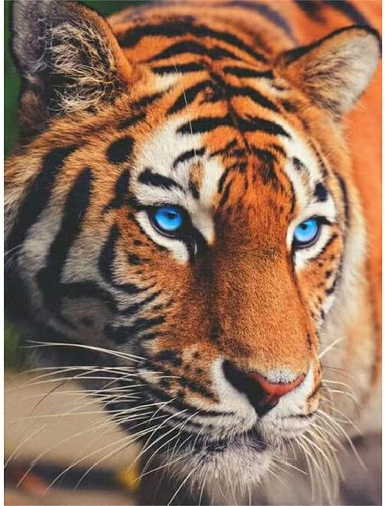 DIY 5D Full Drill Houston Mall Diamond Same day shipping Painting Paint by Kids for Tiger Kits