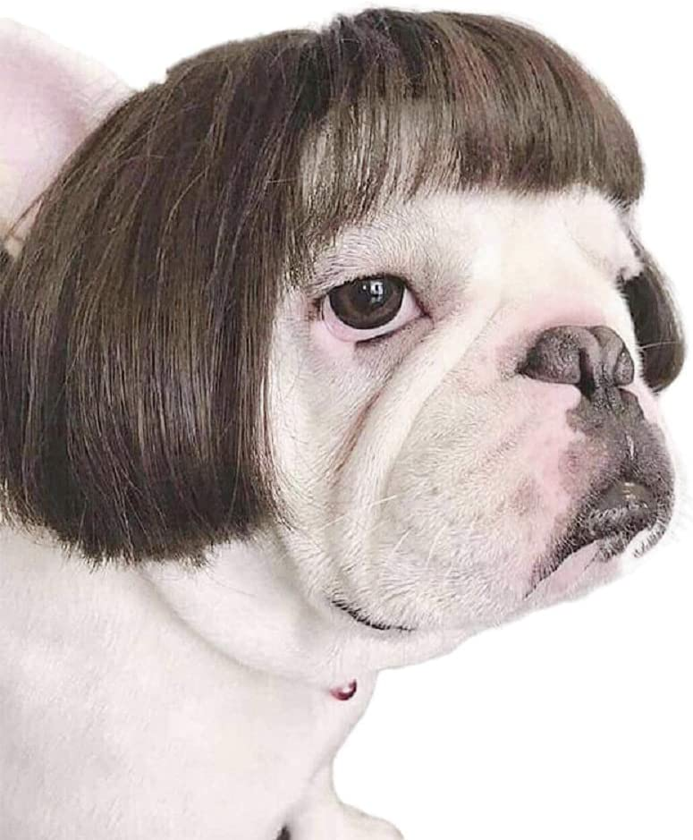 70% Off Coupon – Dog Wig Cosplay for Small Dogs Pets