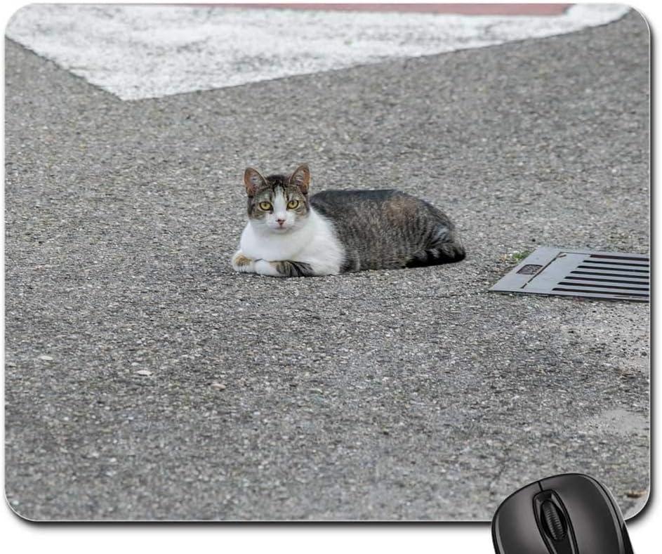 Mouse Pad - Cat Street 2021 Pet Hair City Kitten 35% OFF Cute Feline Fur