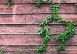 wandmotiv24 Carta da parati Pianta in legno aspetto legno XXL 400 x 280 cm - 8 pezzi Carta da parati fotografica, murale, carta da parati a motivi, carta da parati in tessuto non tessuto M1004