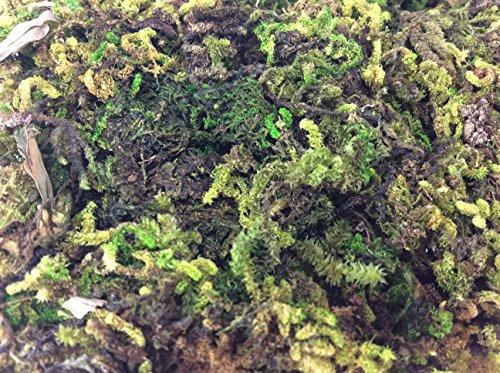 Fake Moss Algae Thallophytic Plant Lichen Green Jardiniere Growing Plant Pot Flower Handmade