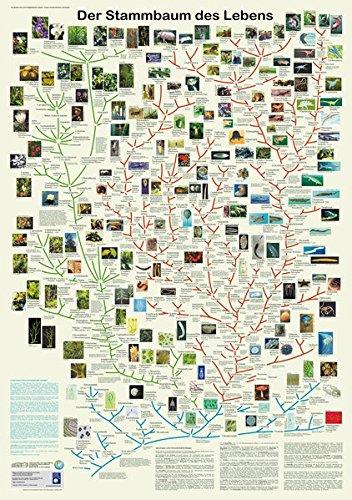 Der Stammbaum des Lebens (Planet-Poster-Box)