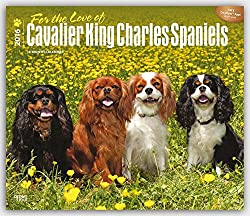 For the Love of Cavalier King Charles Spaniels 2016 Calendar[Browntrout Publishers][Amazon]