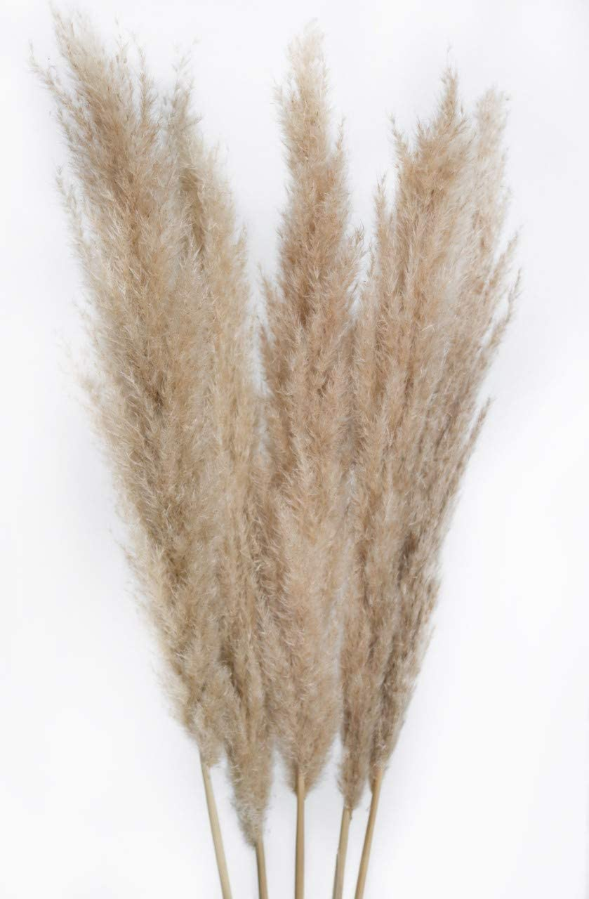 PRsellings Pampas Grass Natural Beige and White Colour ...
