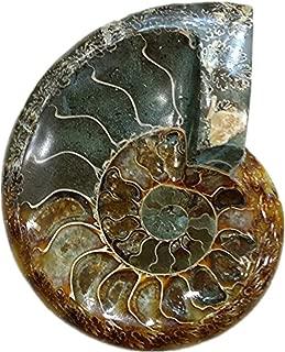LIXUAN Ammonite Fossil Ashtray Carving Ashtray Natural Iridescent Fossil Ammolite Fossil Mineral Specimen