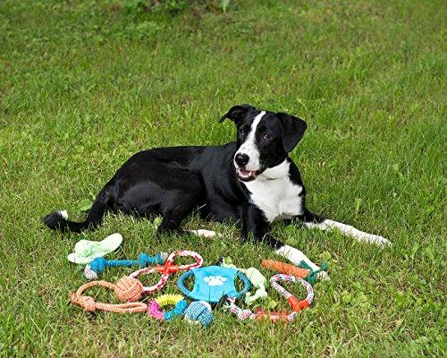 Sweetypet Wurfspiel für den Hund: 10er-Set Bunte Hundespielzeuge aus Baumwolle zum Kauen und Toben (Hunde-Spielzeugset) - 5