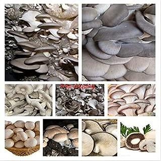 / Bag varia 100 setas comestibles mixtos, semillas de hortalizas