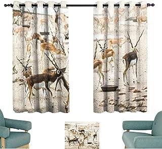 Simple curtain Beautiful wild animal Blackbuck deer (Antilope cervicapra) or Indian antelope in Lal Suhanra National Park Safari Park Bahawalpur Pakistan Suitable for Bedroom Living Room Study, etc.6