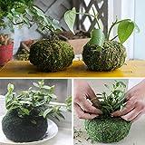 Bluelover 11Cm Cultivos Hidropónicos Musgo Seco Plantar Planta Bola Jardín Macetas Maceta Hidratante