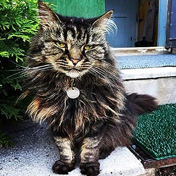 Meow + You = Together Furever