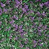 Tenax - Seto sintético de Paneles para Pared de jardín Vertical, Tipo Bosso, Divy 3D Panel Buxus Lilac 0,50 x 1 m, Modular para decoración y blindaje, Verde y Lila, 0,50 x 1 m