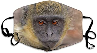 Best one eyed monkey Reviews