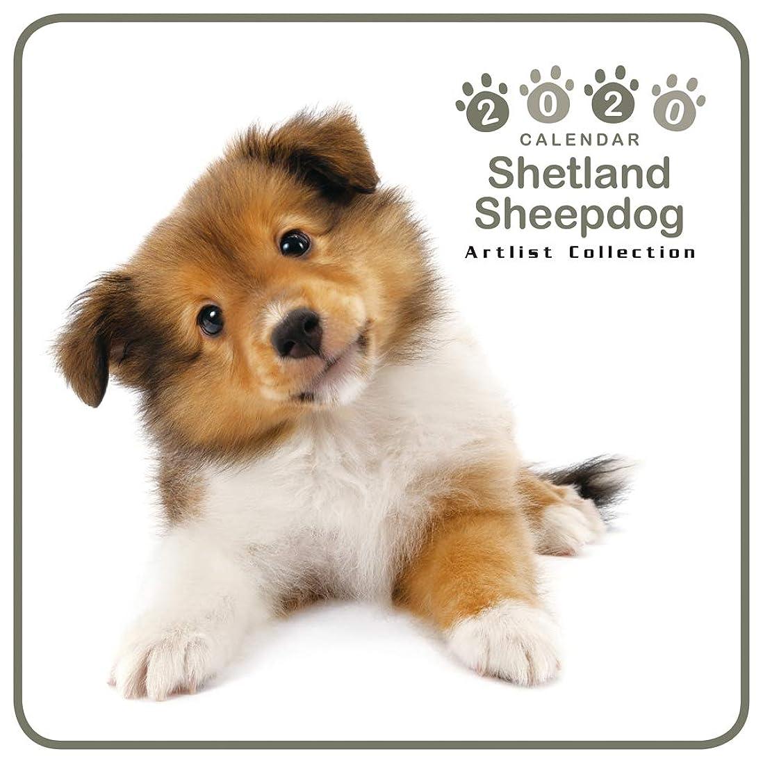 コンデンサー委任するジャングルカレンダー 2020 ミニサイズ 壁掛け シュットランド?シープドッグ (ミニ) 403358 ノーマルレンズシリーズ 2019年9月-2020年12月 アーリスト イヌ いぬ Shetland Sheepdog