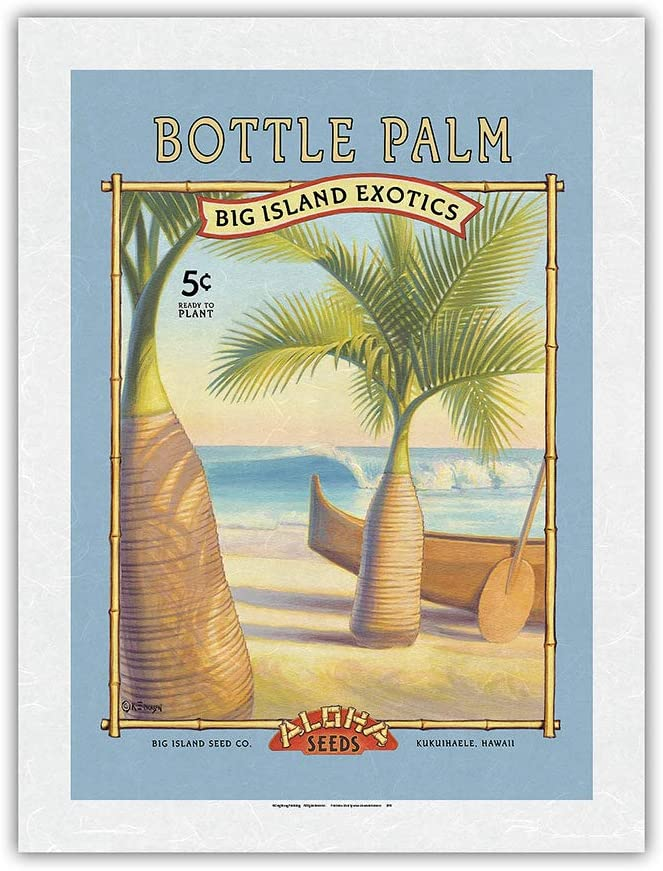Bottle Palm Sales - Aloha Seeds Company Big Seed Island In stock