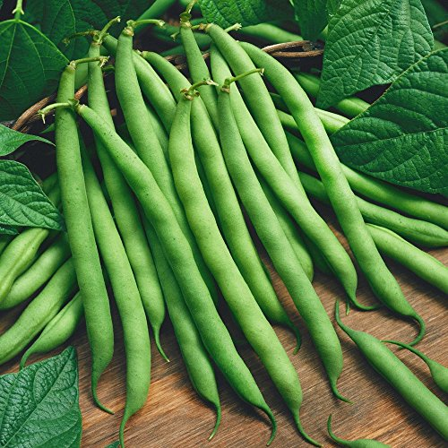 blue lake pole beans - 5