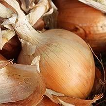 4000 Seeds Texas Early Grano Onion (1/2 oz) Texas 1015, Non-GMO, Variety Sizes