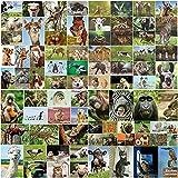 100 tarjetas postales 'ANIMALES' en el set, todas las postales de animales de todo el mundo / 14,8 x 10,5 cm de imagen grande / brillante: ideal para coleccionistas, escuelas o postcrossing de EDITION COLIBRI