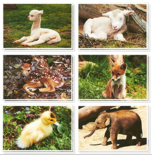 36 Pack All Occasion Greeting Cards � Cute Baby Animal Pictures - Bulk Note Card Box Set with White Envelopes - Blank on the Inside - 4 x 6 Inches