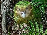 A very strange parrot