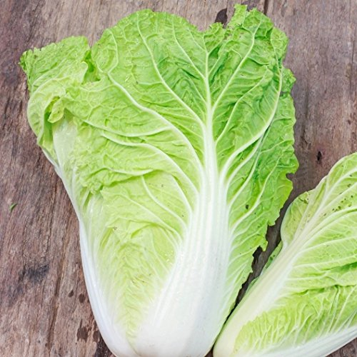 David's Garden Seeds Cabbage Chinese Michihili 9118 (Green) 200 Non-GMO, Heirloom Seeds