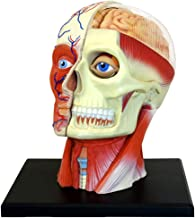 مدل 4 بعدی آناتومی سر انسان محصول Fame Master.