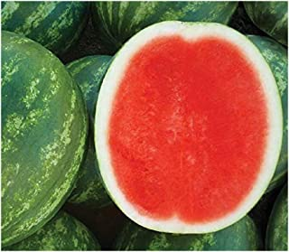 85/% Germination Rates Islas Garden Seeds Popular /& Top Seller!, 75+ Premium Heirloom Seeds,Giant Long Watermelons full of Flavor! Non Gmo Organic Highest Quality Jubilee Sweet Watermelon Seeds