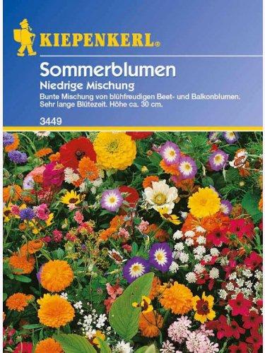 Kiepenkerl Niedrige Sommerblumenmischung