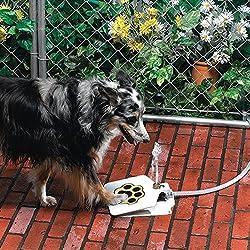 Best Dog Water Fountain - Outdoor und Indoor Optionen