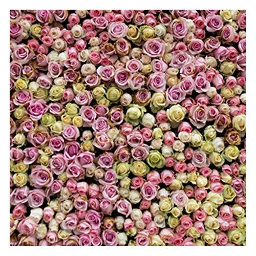 Fondo de fotografía, 150 cm x 150 cm Fondo de fotografía de pared de flores de color plegable Fondo de estudio fotográfico universal, para estudio fotográfico/club/fiesta/fotografía en el hogar(HQ3)