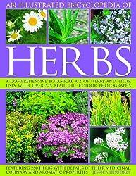 A Comprehensive Guide to Herbs | PreparendessMama