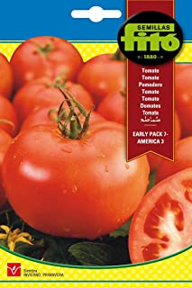 Tomato Early Pack America