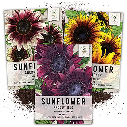Seed Needs, Tricolor Sunflower Seed Collection (Helianthus annuus) Includes...