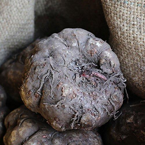 令和2年度秋〜春収穫 国産 生こんにゃく芋 1kg(水酸化カルシウム&生芋こんにゃくレシピ付)みやままさり